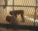 Lire la suite: Le Zoo du Paradis à Tozeur